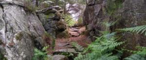 Réserve de Biosphère de Fontainebleau et du Gâtinais