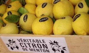 citron-de-menton-rare