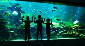 nausicaa-aquarium
