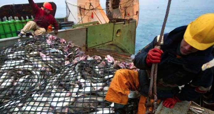 Pêche électrique : une interdiction demandée par le Parlement Européen