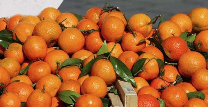 fruits-légumes-saison