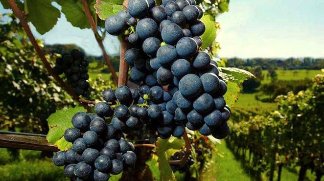 bretagne-renaissance-vignobles