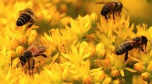 pesticides-neonicotinoides-interdiction