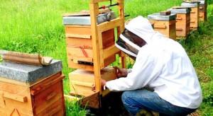 apiculteur vigilant sur la disparition des abeilles