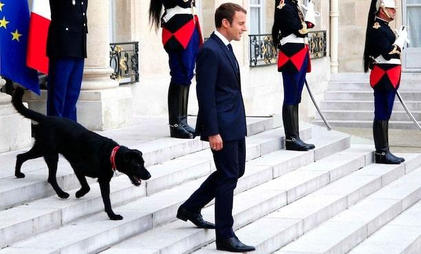 Emmanuel Macron avec son chien
