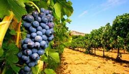 Les Vins Franc Ais Sont Un Atout Touristique