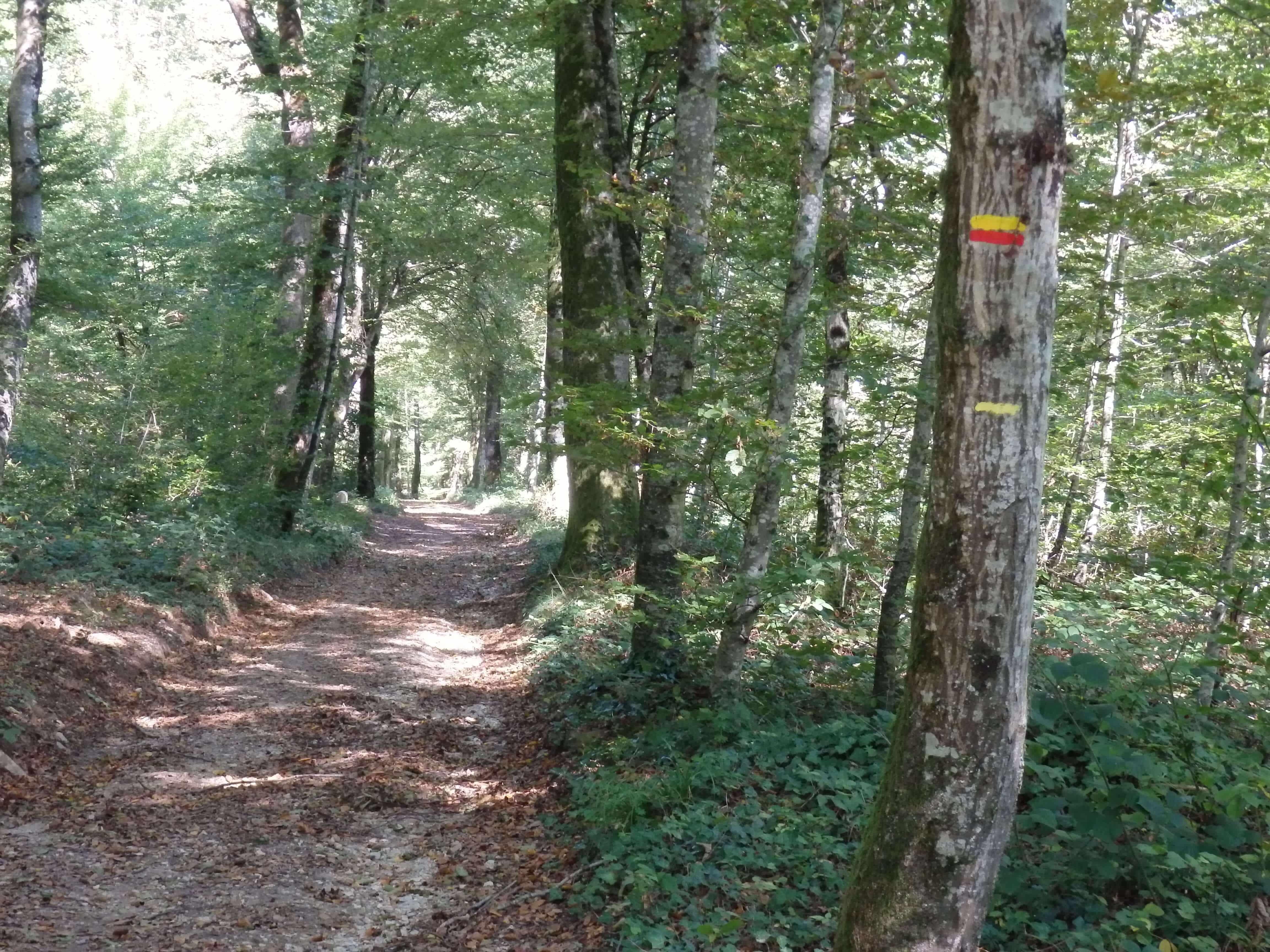 la forêt de Besançon