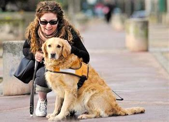 Un chien d'aveugle aupres De Sa Maitresse