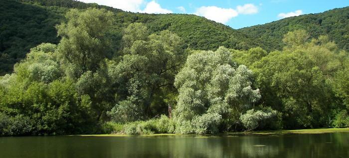 des arbres au bord de l'eau