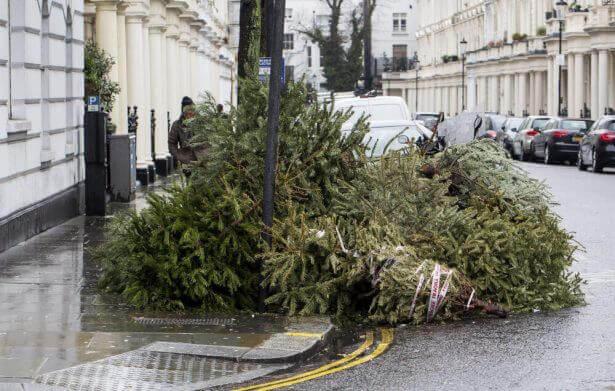un dépôt sauvage de sapins de Noël