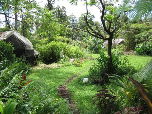 Des jardins-forêts comestibles