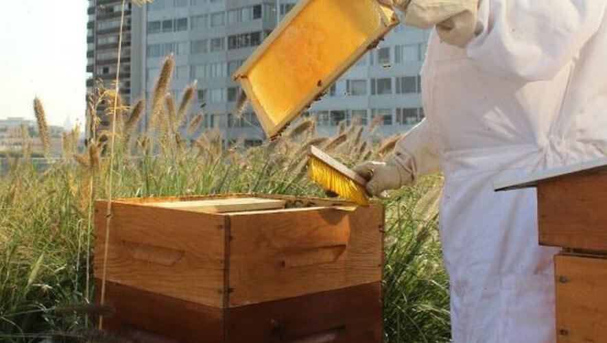 une ruche en ville