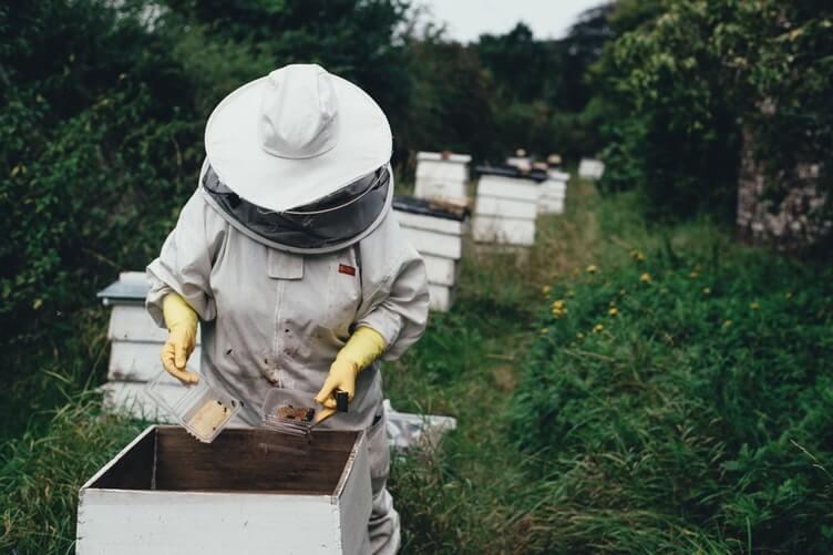 Des ruches à Reims