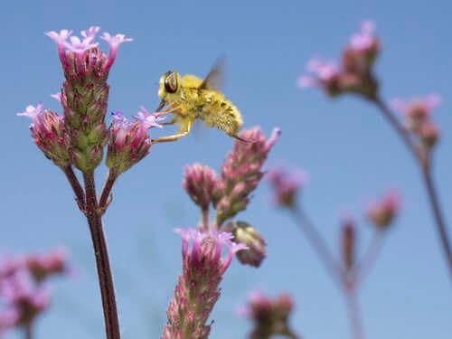 un inseste butine une fleur