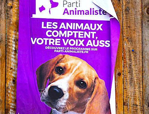 Le Parti animaliste pourrait créer la surprise aux prochaines Municipales.