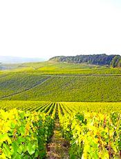 L'AOC Bourgogne pourrait bientôt bénéficier à certains vins du Beaujolais.