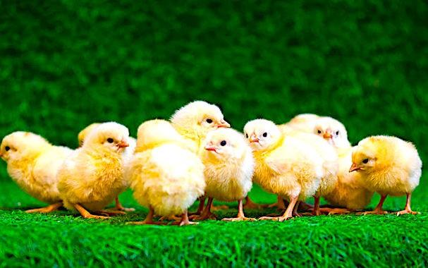Les questions soulevées par le bien-être animal témoignent de fortes attentes de société.