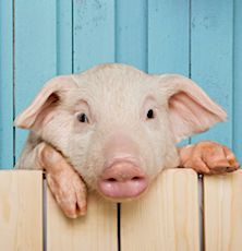 Un nouveau Plan vient d'être présenté pour améliorer le bien-être animal.