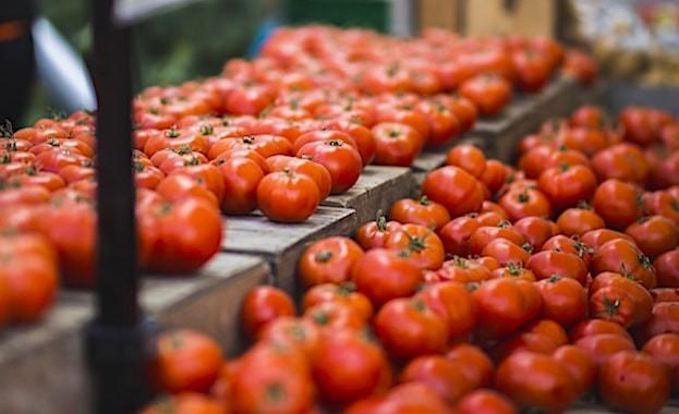 Aujourd'hui, d'énormes quantités de tomates menacées par un nouveau virus doivent être protégées.