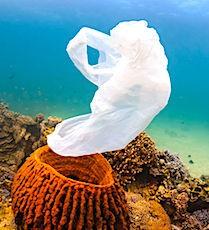 Avec le Projet Indigo, les déchets en mer, dont les plastiques, devraient se réduire.
