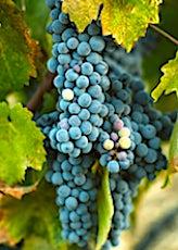 La consommation des vins bio augmente dans le monde entier.