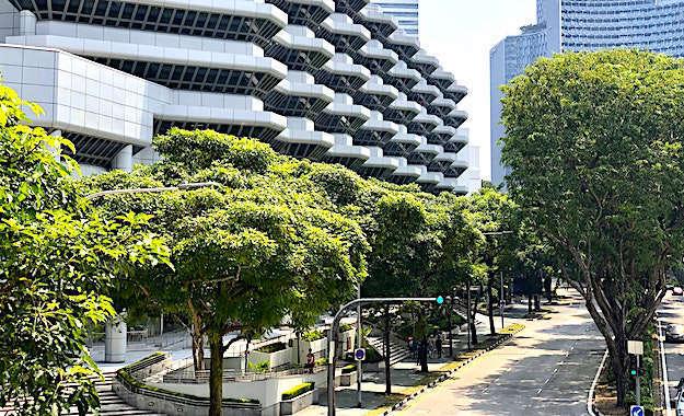 Planter des arbres : une nouvelle mesure pour les Municipales