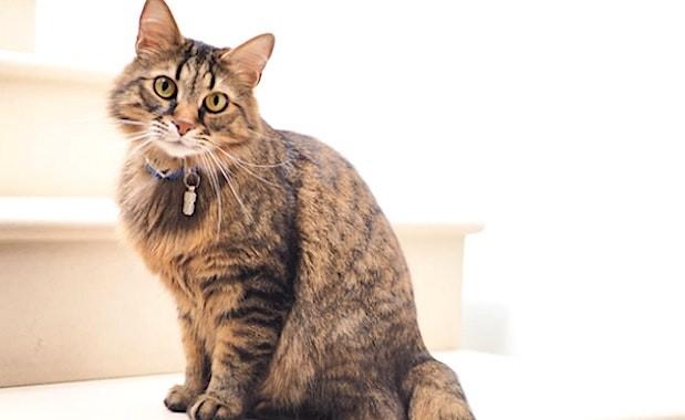 A Rennes, pour les élections municipales, un chat représentera la liste de La France Insoumise.
