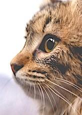 A Rennes, un chat sera présent sur la liste de La France Insoumise.