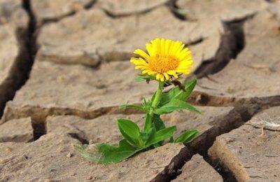 Actuellement, de fortes sécheresses sont attendues dans certaiens régions en manque de pluies.