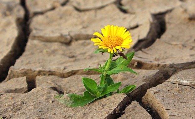 Fortes sécheresses : une crainte provoquée par le manque de pluies