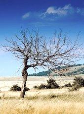 La crainte de fortes sécheresses préoccupe aujourd'hui plusieurs régions françaises.