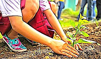 Jardins familiaux : un entretien dangereux pour la santé