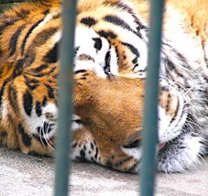nterdiction progressive des animaux sauvages dans des spectacles concernera aussi les cirques.