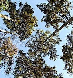 Actuellement, des hécatombes d'arbres sont observées dans les forêts françaises.