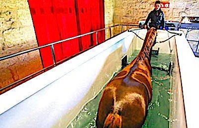 La balnéothérapie pour chevaux est encore une spécialité médicale peu connue.