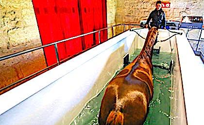 Balnéothérapie pour chevaux : un nouveau centre ouvre dans le Calvados
