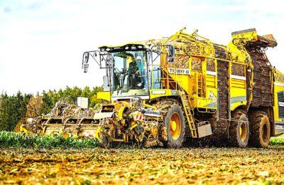 La culture de la betterave va bénficier d'une sérogation sur les pesticides