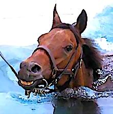 La balnéothérapie pour chevaux est encore une spécialité médicale méconnue. A Goustranville, dans le Calvados, un nouveau centre vient de s'ouvrir.