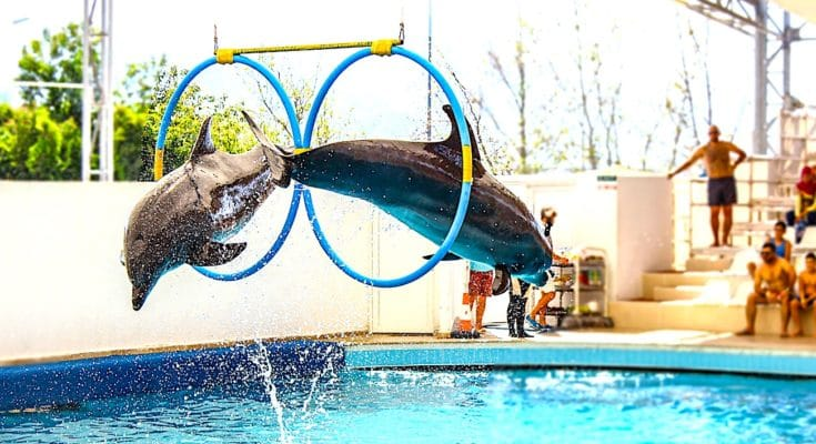 Interdiction progressive : retrait des animaux des delphinariums