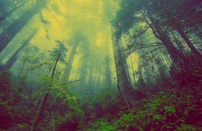 Préserver les arbres et les haies est une initative écologique très utile