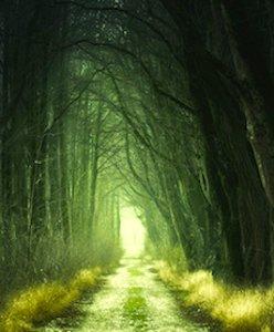 Préserver les arbres et les haies champêtres est essentiel pour notre écosystème