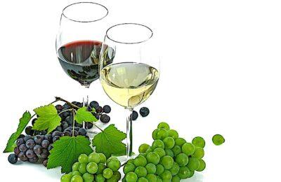 L'oenotourisme permet aux vins de Cheverny de résister à la crise sanitaire