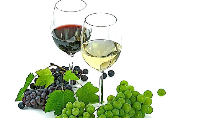 Oenotourisme : les vins de Cheverny résistent à la crise