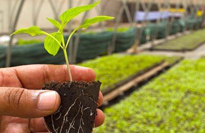 L'agriculture biologique représente aujourd'hui un secteur français porteur pour l'emploi
