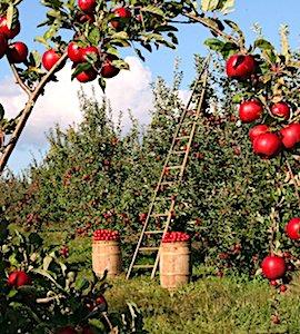 photo d'un verger symbole d'une agriculture biologique en France