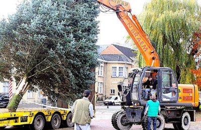 Un sapin de fête, que Bordeaux a refusé, sera installé pour Noël en Corrèze
