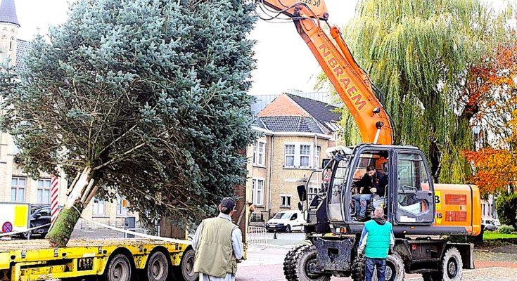 Sapin de fête : l'arbre que refuse Bordeaux fait des heureux en Corrèze