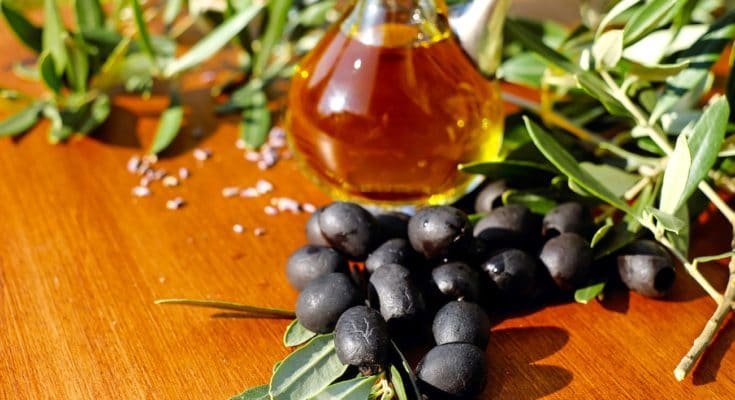 La cueillette de l'olive noire de Nyons a lieu en décembre dans la Drôme