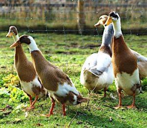 L'inquiétude autour de la grippe aviaire s'explique notamment par son caractère répétitif.