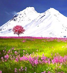vue d'une montagne pour le désenneigement indiscutable des  Alpes